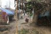 La pauvreté et la détresse après les inondations dans le district de Siraha sont visibles. (csi)