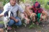 Bhakta et son épouse sont infiniment reconnaissants pour les chèvres. Ils espèrent que leur élevage va se développer. (csi)